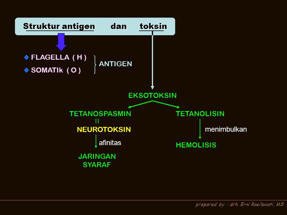 Struktur antigen dan toksin