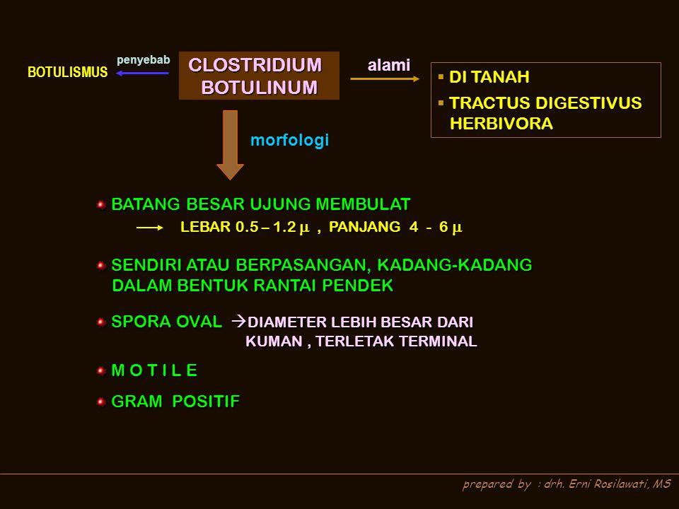 CLOSTRIDIUM BOTULINUM alami DI TANAH TRACTUS DIGESTIVUS HERBIVORA