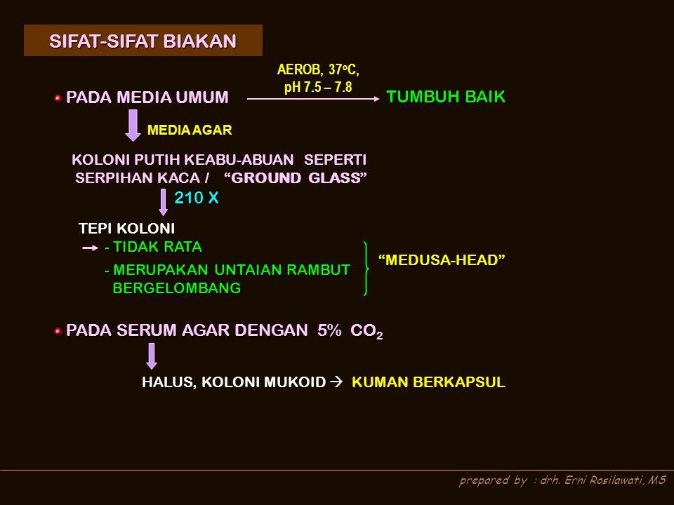 SIFAT-SIFAT BIAKAN TUMBUH BAIK 210 X AEROB, 37oC, pH 7.5 – 7.8