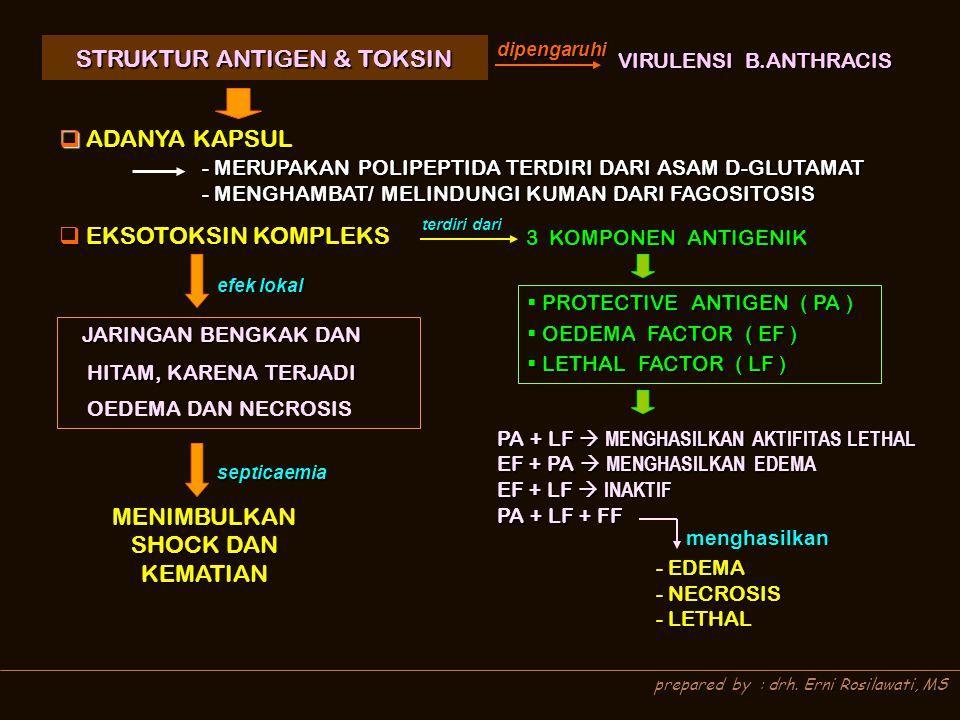 STRUKTUR ANTIGEN & TOKSIN