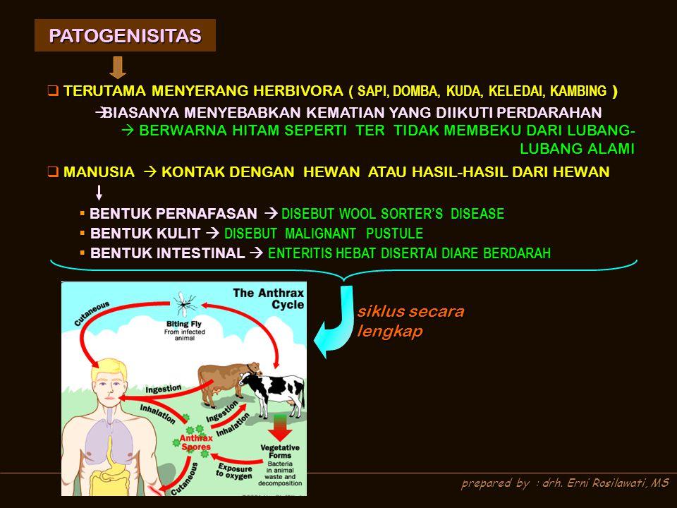 PATOGENISITAS siklus secara lengkap