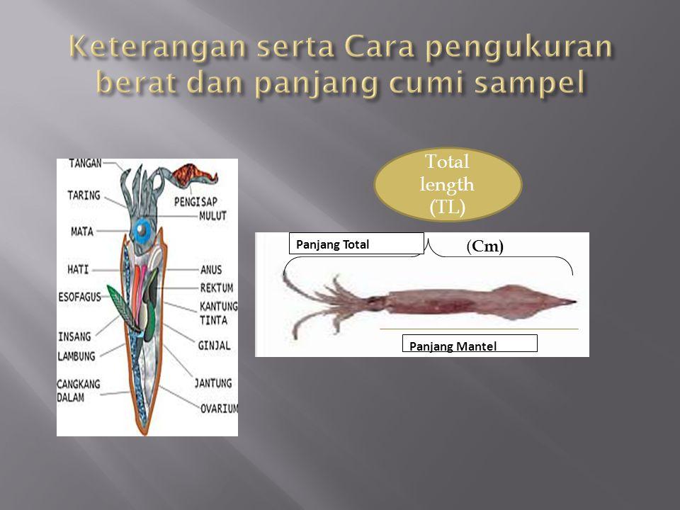 Keterangan serta Cara pengukuran berat dan panjang cumi sampel