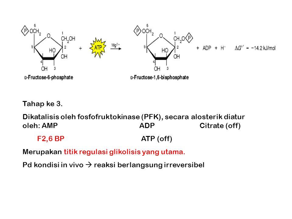 Tahap ke 3. Dikatalisis oleh fosfofruktokinase (PFK), secara alosterik diatur oleh: AMP ADP Citrate (off)