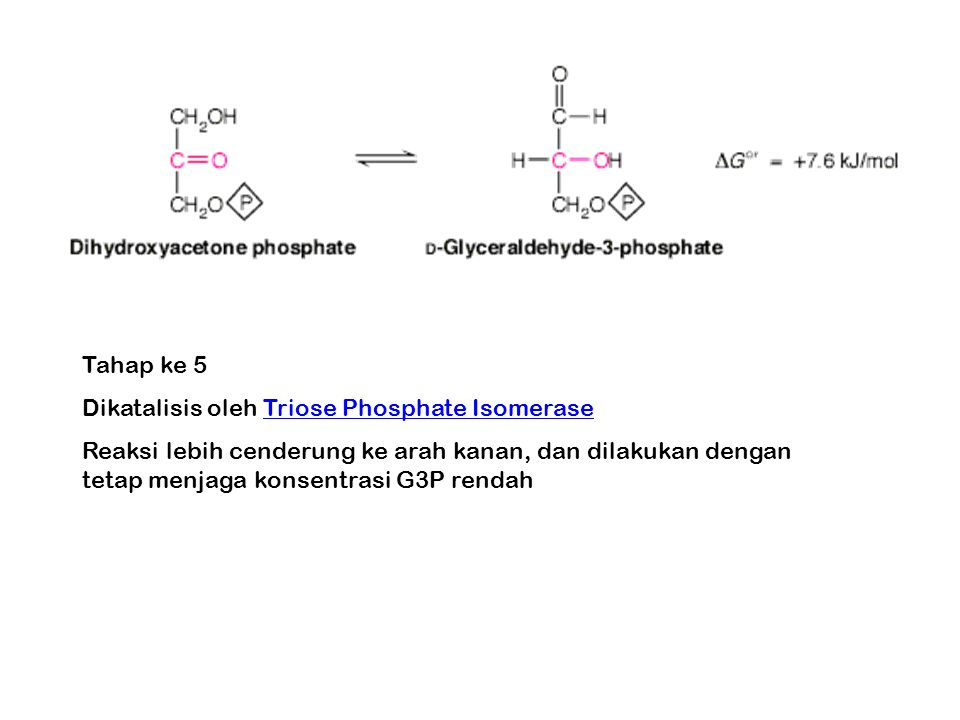 Tahap ke 5 Dikatalisis oleh Triose Phosphate Isomerase.