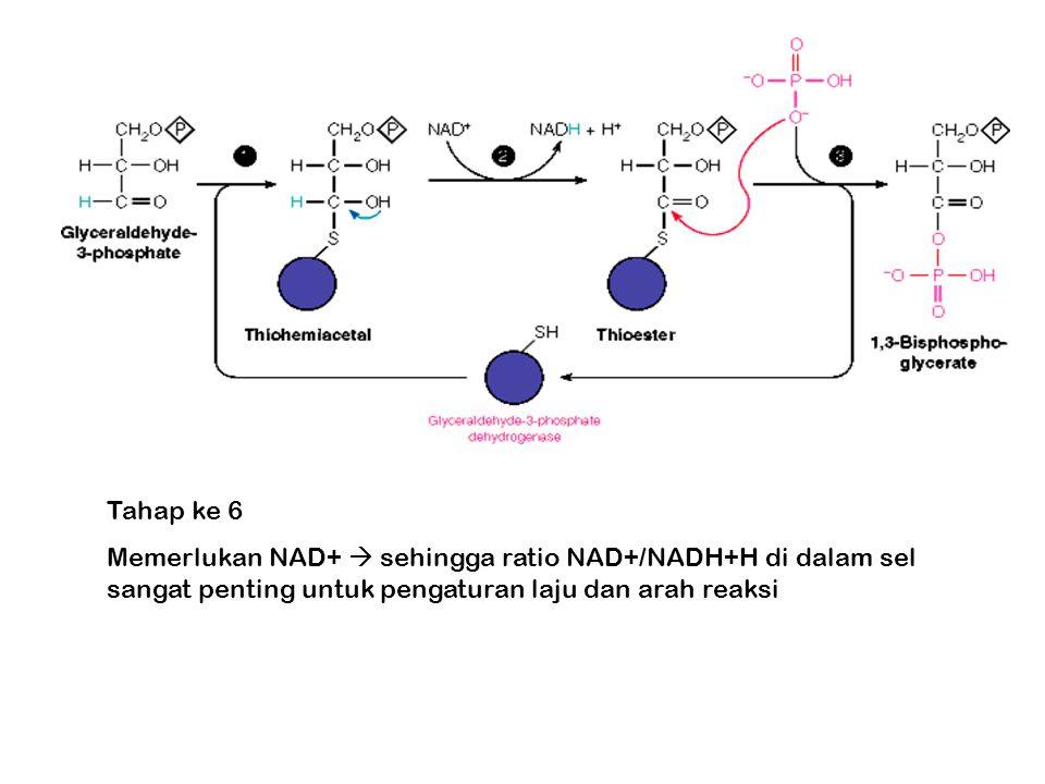 Tahap ke 6 Memerlukan NAD+  sehingga ratio NAD+/NADH+H di dalam sel sangat penting untuk pengaturan laju dan arah reaksi.