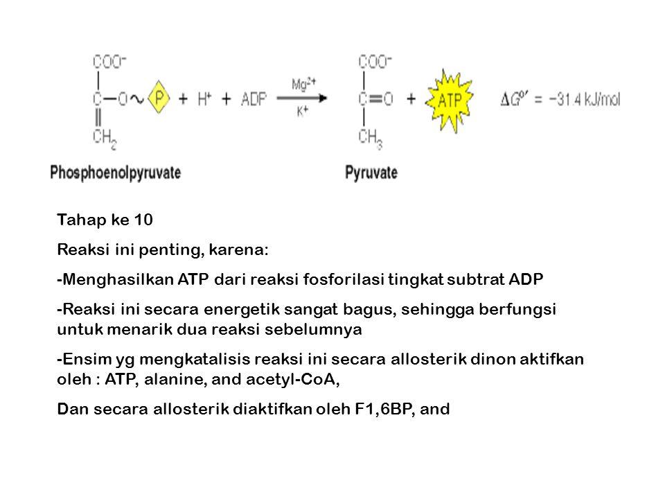 Tahap ke 10 Reaksi ini penting, karena: Menghasilkan ATP dari reaksi fosforilasi tingkat subtrat ADP.