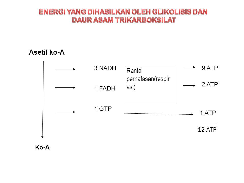 ENERGI YANG DIHASILKAN OLEH GLIKOLISIS DAN DAUR ASAM TRIKARBOKSILAT
