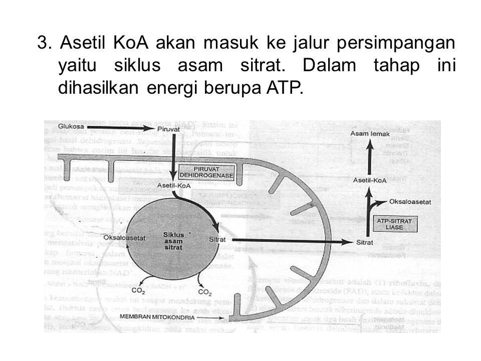 3. Asetil KoA akan masuk ke jalur persimpangan yaitu siklus asam sitrat.