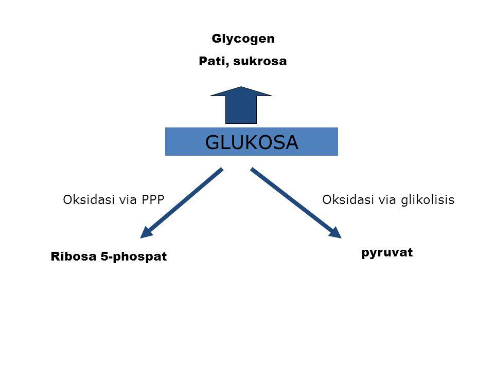 GLUKOSA Glycogen Pati, sukrosa Oksidasi via PPP