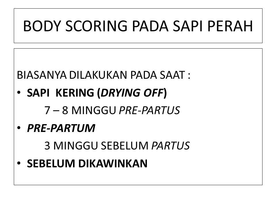 BODY SCORING PADA SAPI PERAH