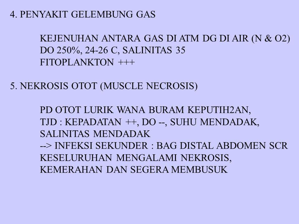 4. PENYAKIT GELEMBUNG GAS