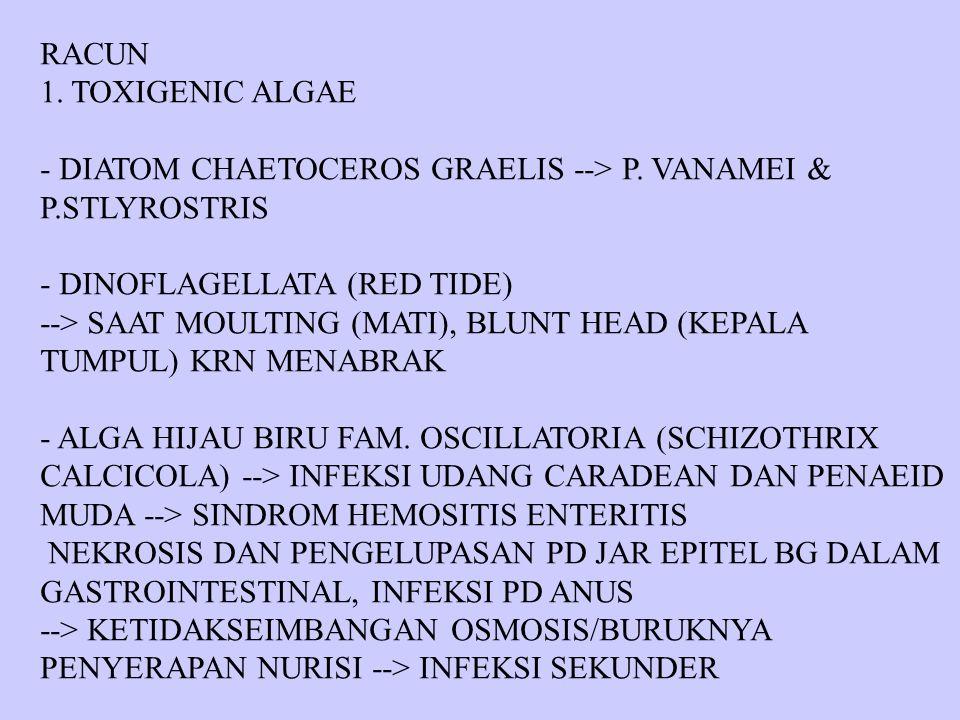 RACUN 1. TOXIGENIC ALGAE. - DIATOM CHAETOCEROS GRAELIS --> P. VANAMEI & P.STLYROSTRIS. - DINOFLAGELLATA (RED TIDE)