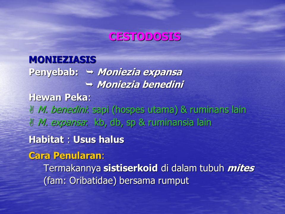 CESTODOSIS MONIEZIASIS Penyebab:  Moniezia expansa