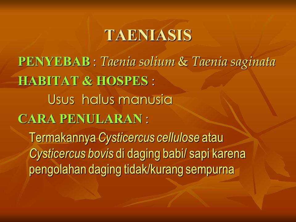 TAENIASIS PENYEBAB : Taenia solium & Taenia saginata