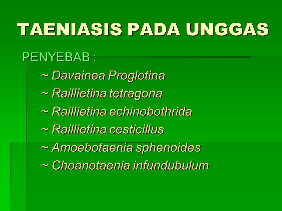 TAENIASIS PADA UNGGAS PENYEBAB : ~ Davainea Proglotina