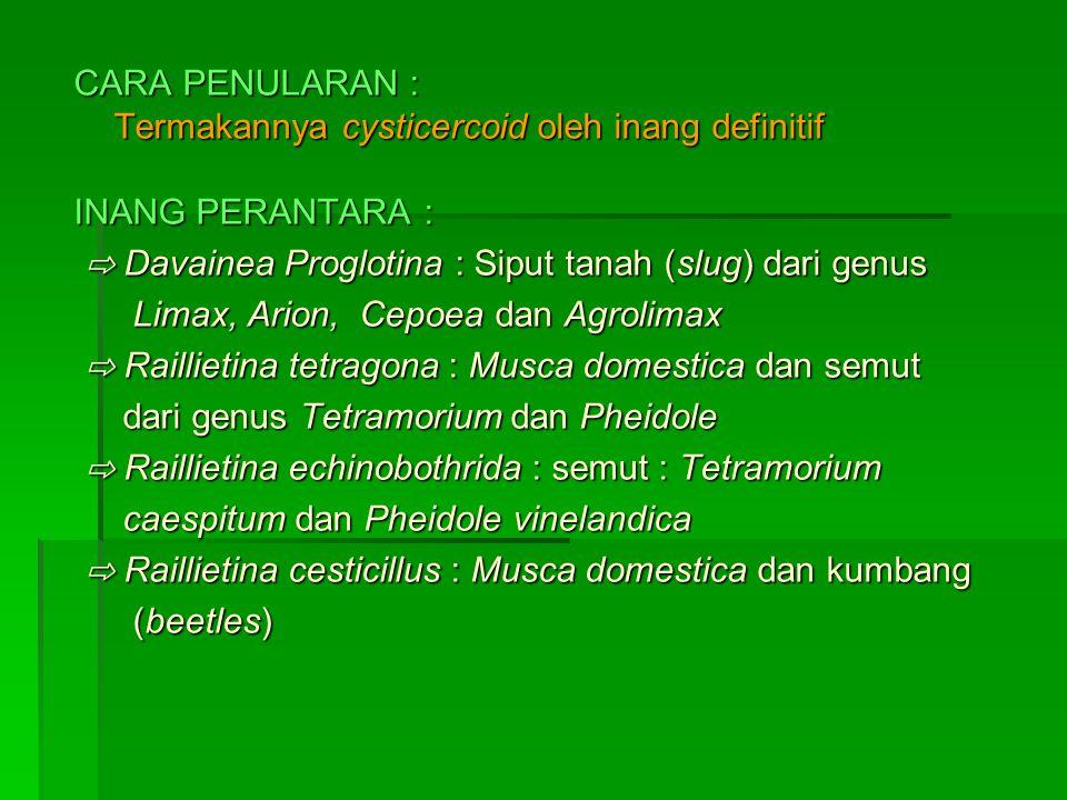 CARA PENULARAN : Termakannya cysticercoid oleh inang definitif. INANG PERANTARA : ⇨ Davainea Proglotina : Siput tanah (slug) dari genus.