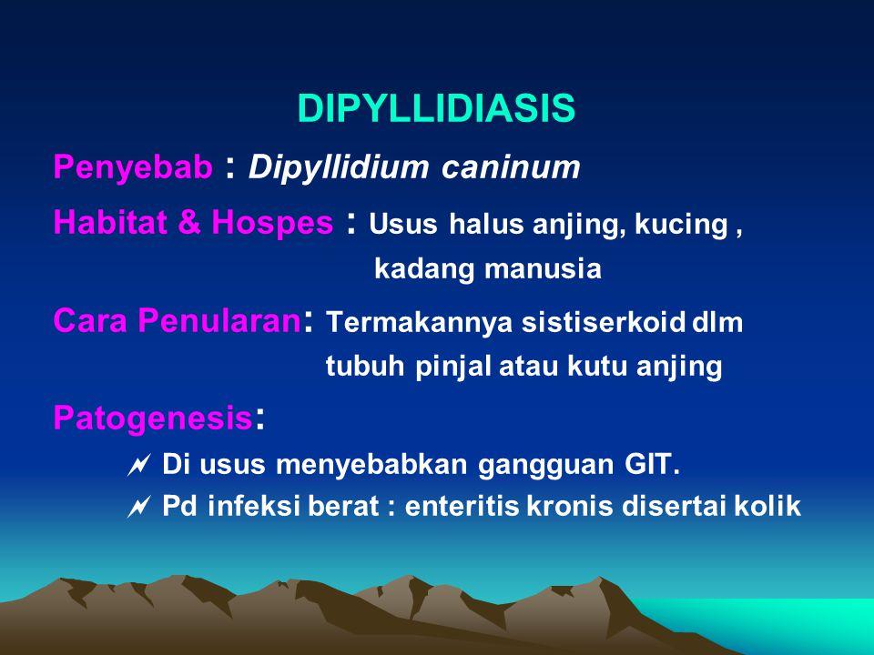 DIPYLLIDIASIS Penyebab : Dipyllidium caninum