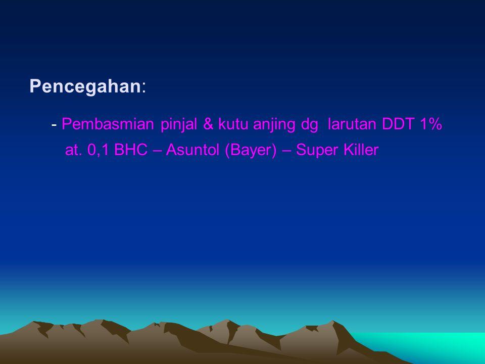 - Pembasmian pinjal & kutu anjing dg larutan DDT 1%