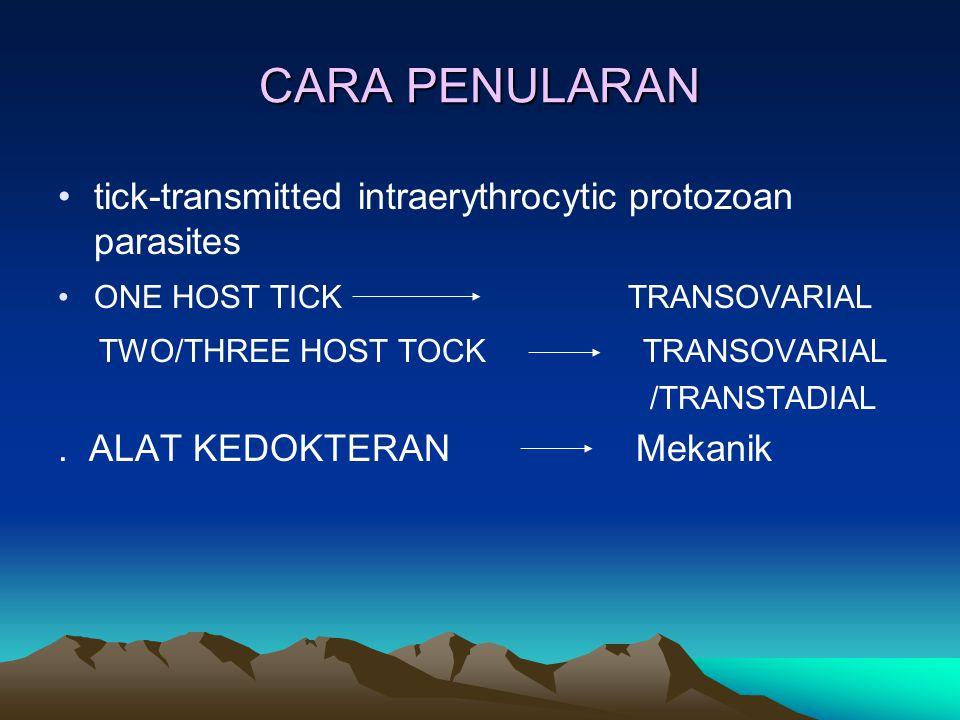 CARA PENULARAN tick-transmitted intraerythrocytic protozoan parasites