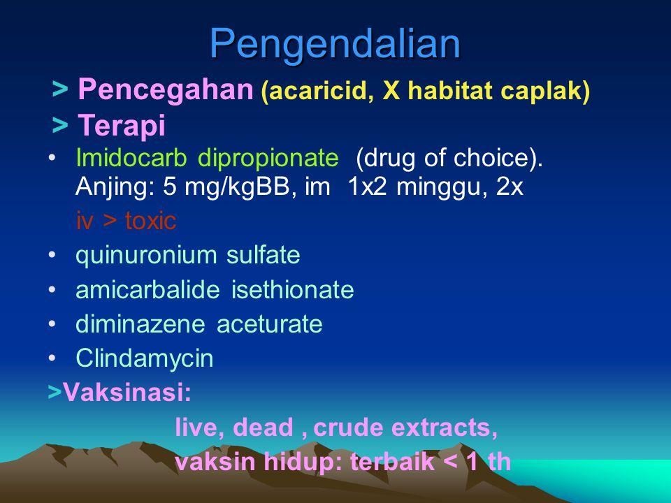 Pengendalian > Pencegahan (acaricid, X habitat caplak) > Terapi