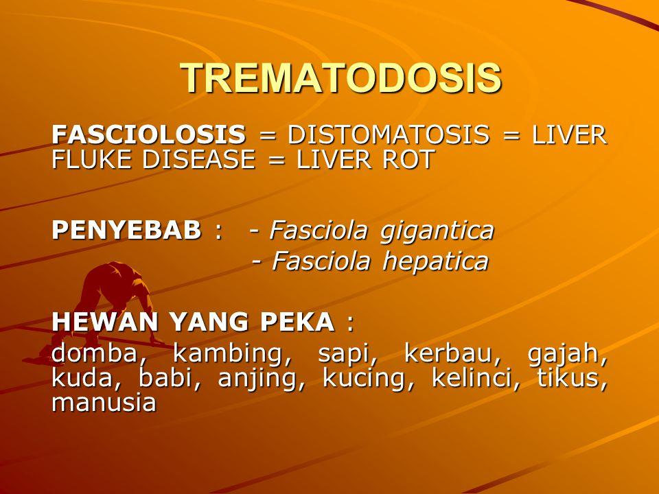 TREMATODOSIS FASCIOLOSIS = DISTOMATOSIS = LIVER FLUKE DISEASE = LIVER ROT. PENYEBAB : - Fasciola gigantica.