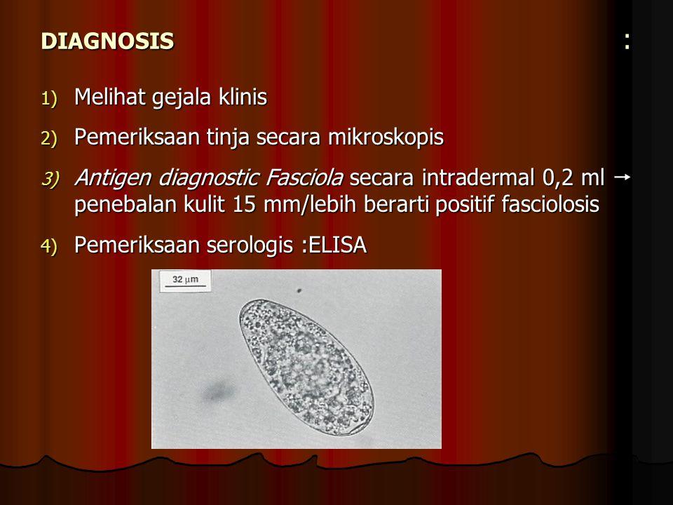DIAGNOSIS : Melihat gejala klinis Pemeriksaan tinja secara mikroskopis