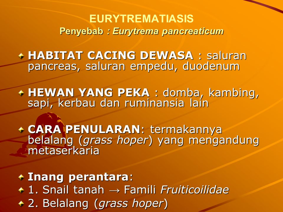 EURYTREMATIASIS Penyebab : Eurytrema pancreaticum