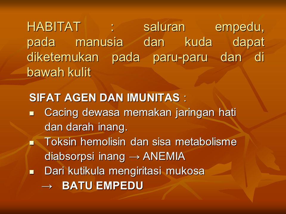HABITAT : saluran empedu, pada manusia dan kuda dapat diketemukan pada paru-paru dan di bawah kulit