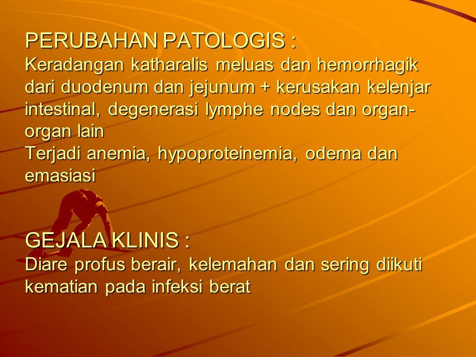 PERUBAHAN PATOLOGIS : Keradangan katharalis meluas dan hemorrhagik dari duodenum dan jejunum + kerusakan kelenjar intestinal, degenerasi lymphe nodes dan organ-organ lain Terjadi anemia, hypoproteinemia, odema dan emasiasi GEJALA KLINIS : Diare profus berair, kelemahan dan sering diikuti kematian pada infeksi berat