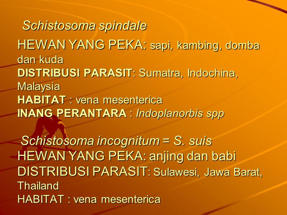 Schistosoma spindale HEWAN YANG PEKA: sapi, kambing, domba dan kuda DISTRIBUSI PARASIT: Sumatra, Indochina, Malaysia HABITAT : vena mesenterica INANG PERANTARA : Indoplanorbis spp Schistosoma incognitum = S.