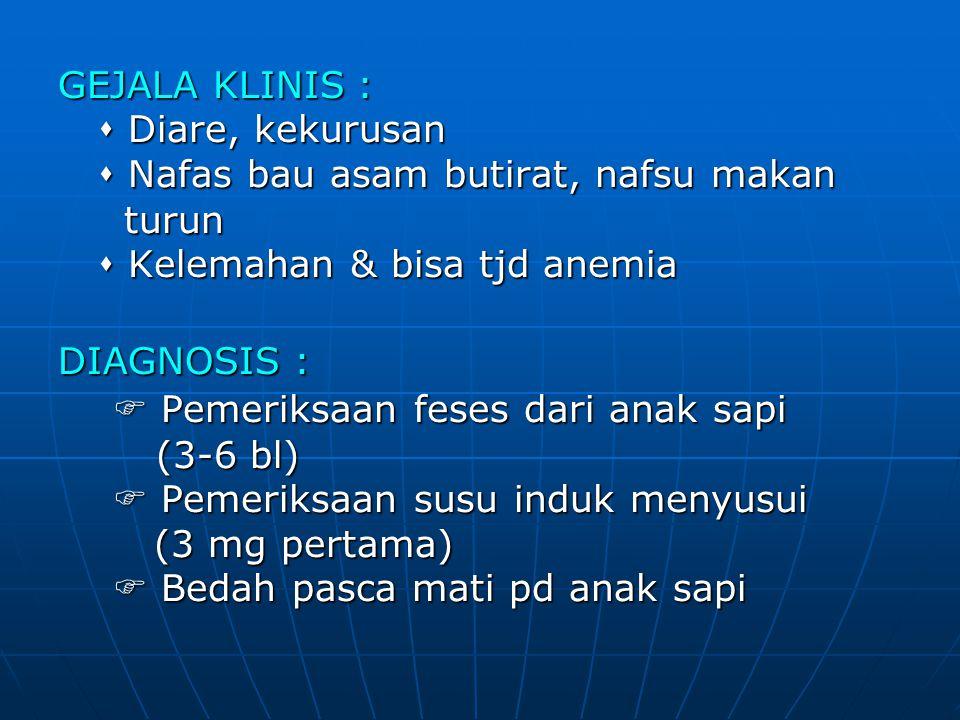 GEJALA KLINIS :  Diare, kekurusan.  Nafas bau asam butirat, nafsu makan. turun.  Kelemahan & bisa tjd anemia.