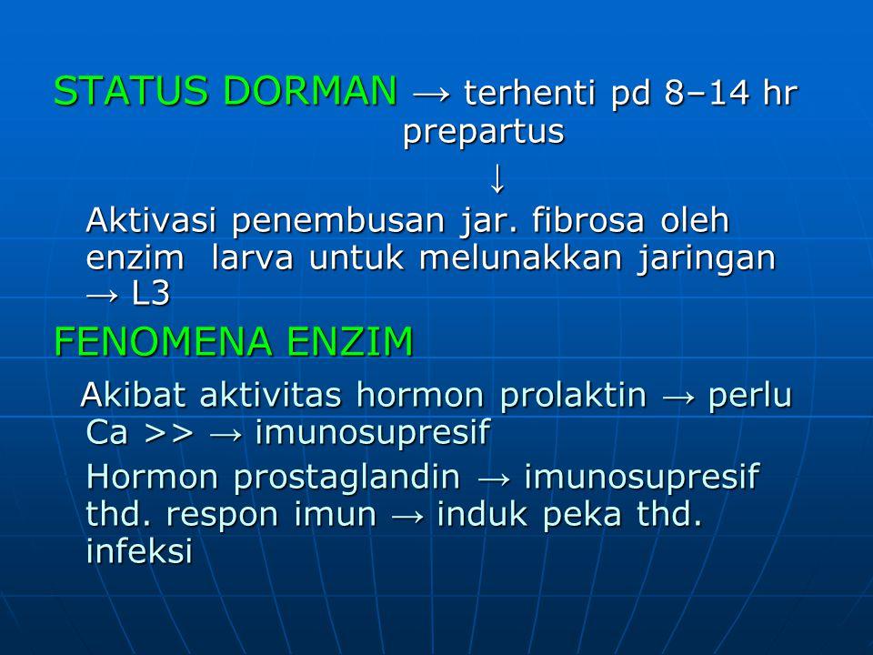 STATUS DORMAN → terhenti pd 8–14 hr prepartus