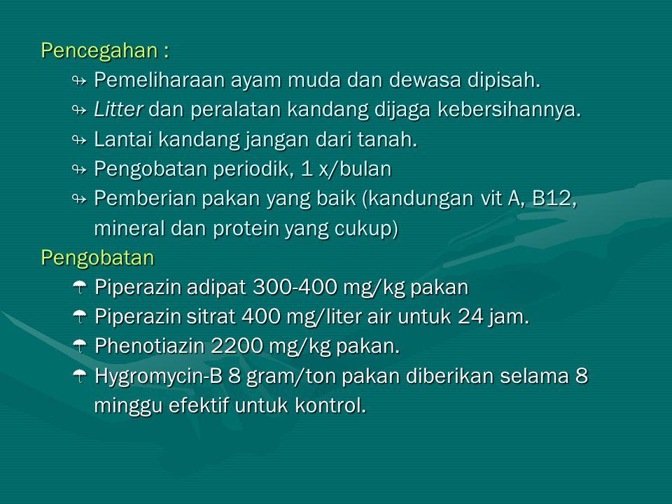 Pencegahan : ↬ Pemeliharaan ayam muda dan dewasa dipisah. ↬ Litter dan peralatan kandang dijaga kebersihannya.