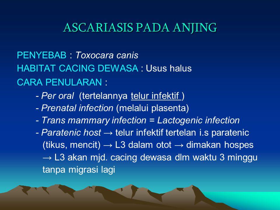 ASCARIASIS PADA ANJING