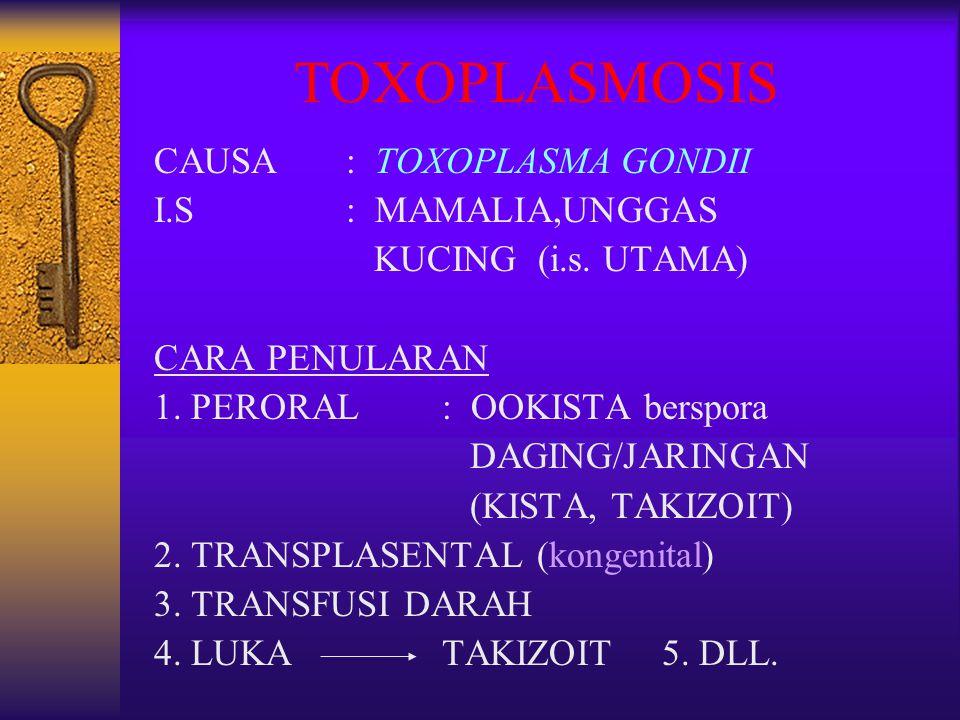 TOXOPLASMOSIS CAUSA : TOXOPLASMA GONDII I.S : MAMALIA,UNGGAS