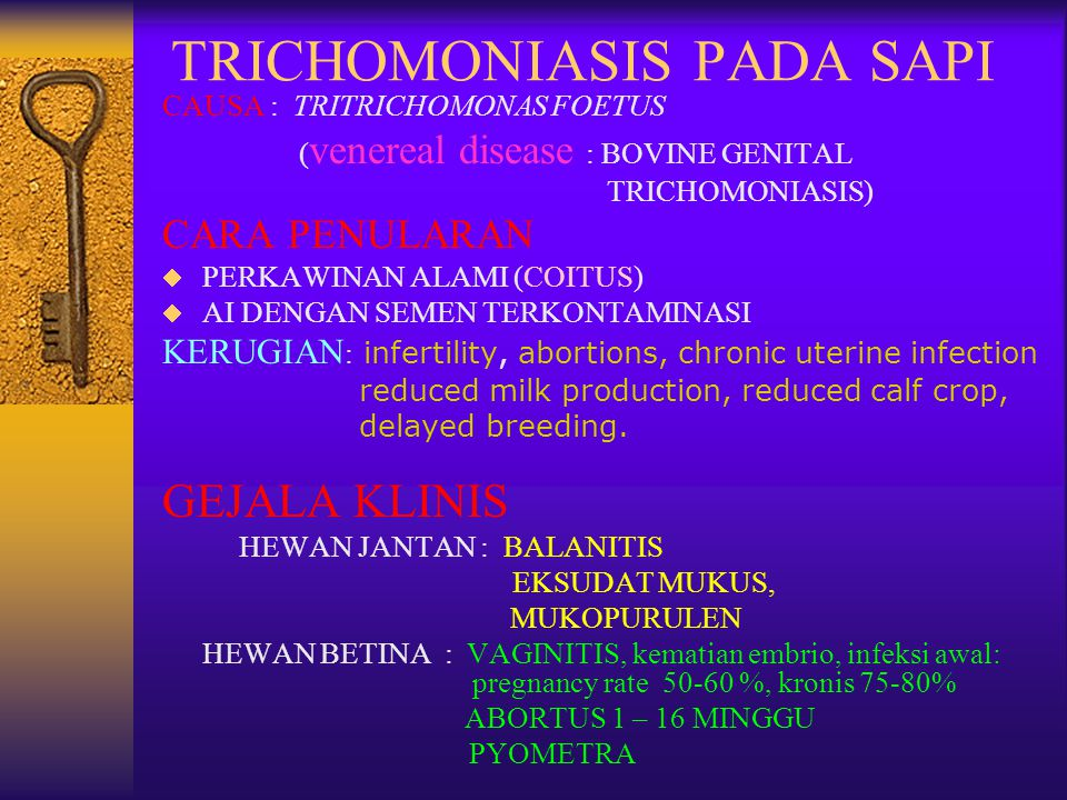 TRICHOMONIASIS PADA SAPI