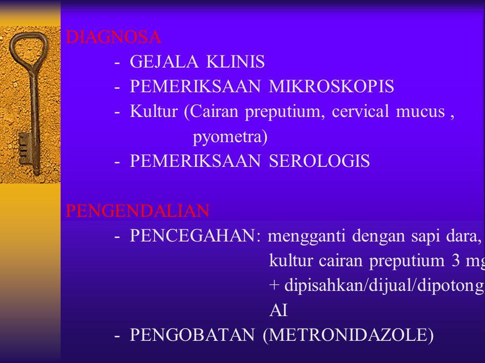 DIAGNOSA - GEJALA KLINIS. - PEMERIKSAAN MIKROSKOPIS. - Kultur (Cairan preputium, cervical mucus ,