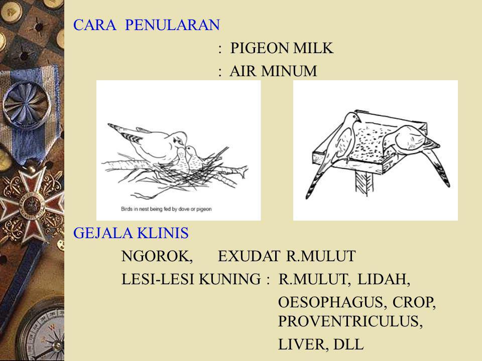CARA PENULARAN : PIGEON MILK. : AIR MINUM. GEJALA KLINIS. NGOROK, EXUDAT R.MULUT. LESI-LESI KUNING : R.MULUT, LIDAH,