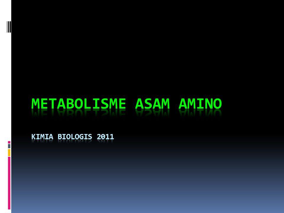Metabolisme asam amino Kimia Biologis 2011