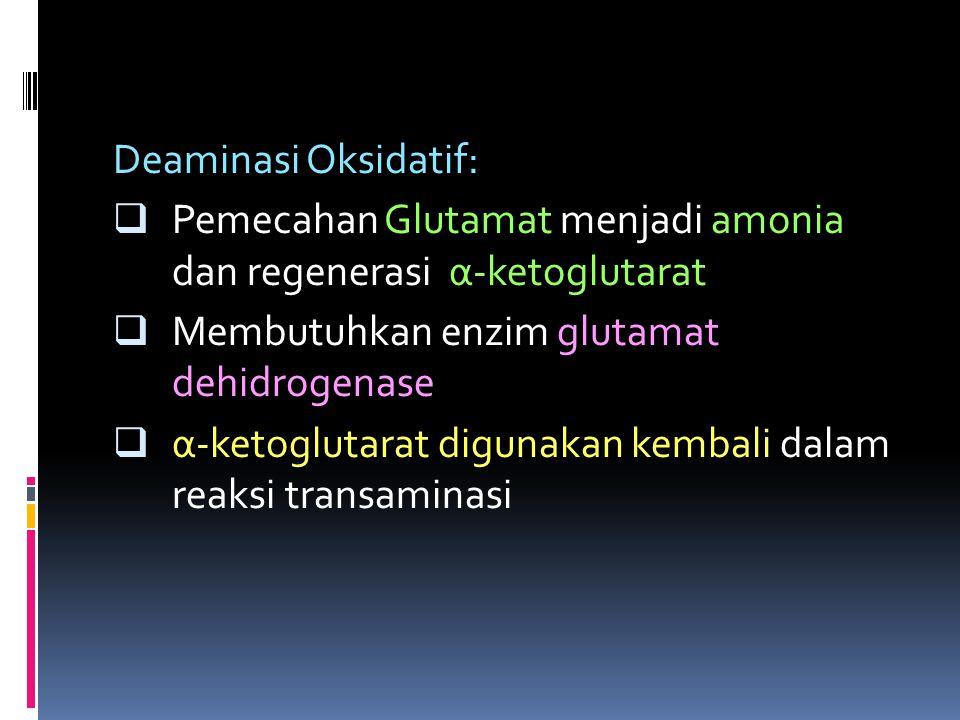 Deaminasi Oksidatif: Pemecahan Glutamat menjadi amonia dan regenerasi α-ketoglutarat. Membutuhkan enzim glutamat dehidrogenase.