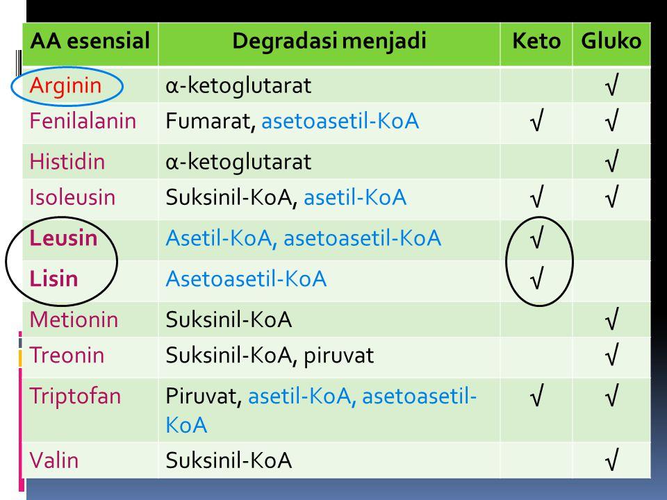 AA esensial Degradasi menjadi. Keto. Gluko. Arginin. α-ketoglutarat. √ Fenilalanin. Fumarat, asetoasetil-KoA.