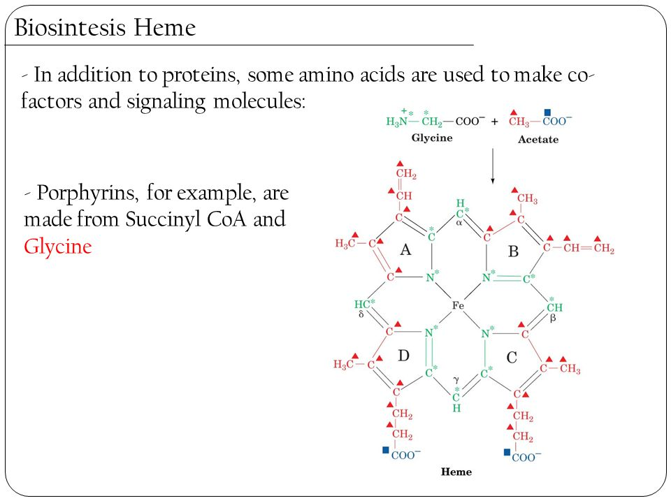 Biosintesis Heme - In addition to proteins, some amino acids are used to make co-factors and signaling molecules: