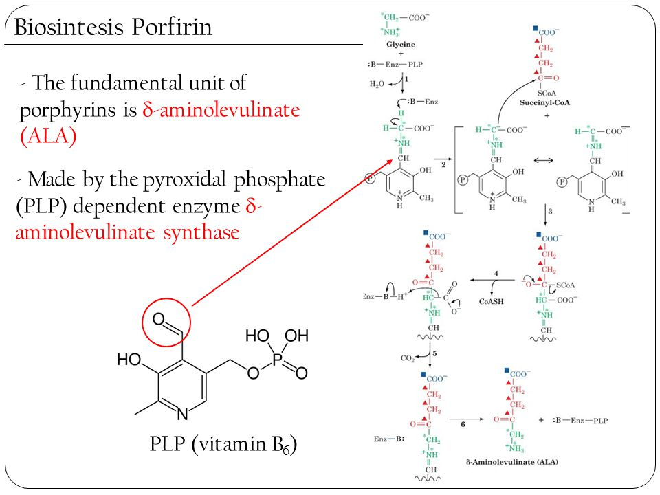 Biosintesis Porfirin - The fundamental unit of porphyrins is -aminolevulinate (ALA)
