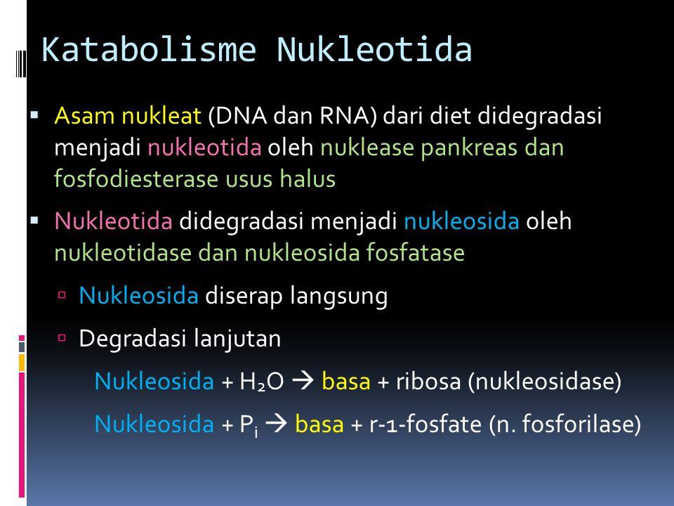 Katabolisme Nukleotida