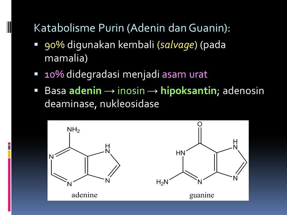 Katabolisme Purin (Adenin dan Guanin):