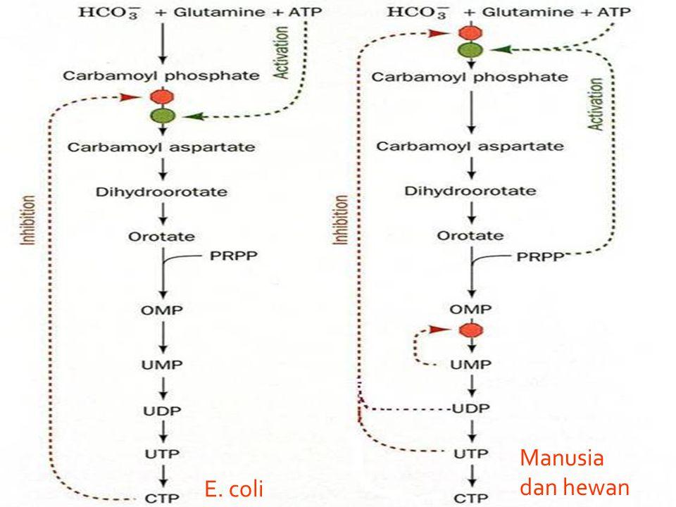 Manusia dan hewan E. coli