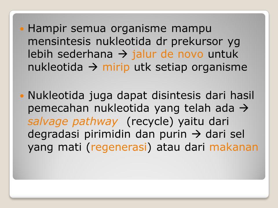 Hampir semua organisme mampu mensintesis nukleotida dr prekursor yg lebih sederhana  jalur de novo untuk nukleotida  mirip utk setiap organisme