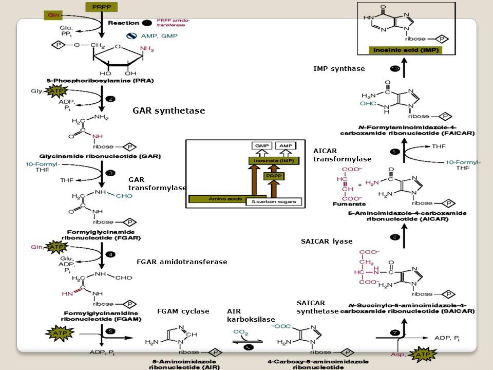 GAR synthetase IMP synthase AICAR transformylase GAR transformylase