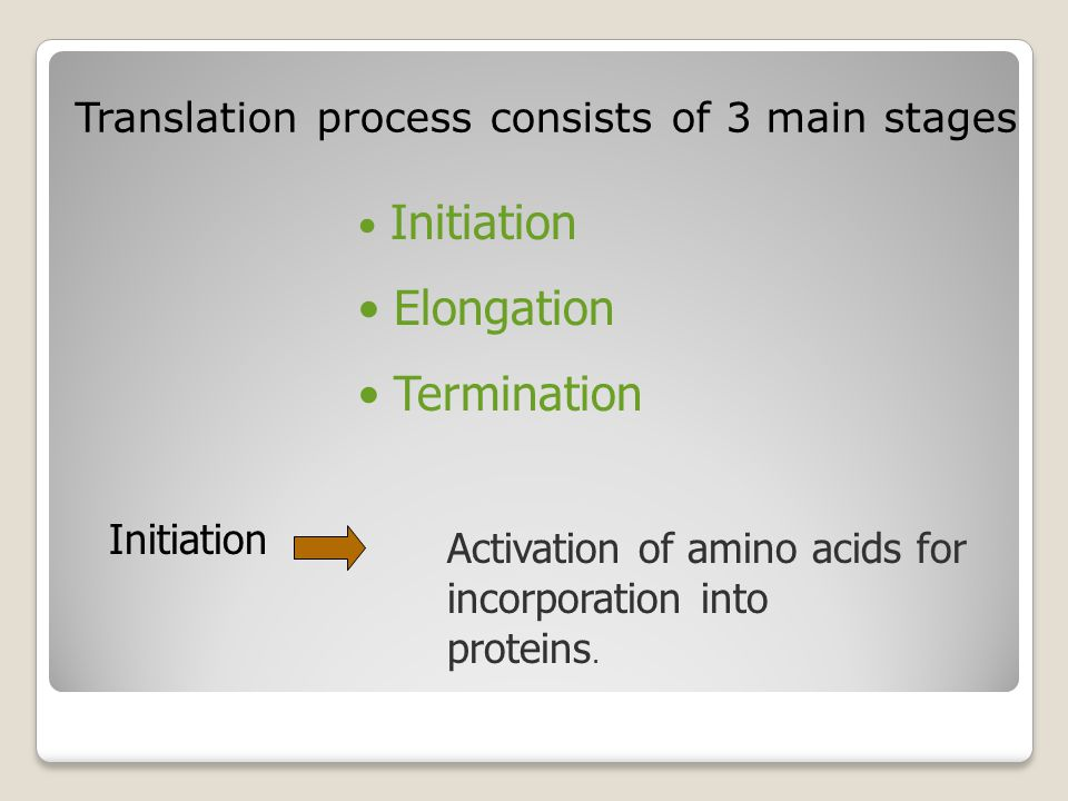 Elongation Termination Translation process consists of 3 main stages