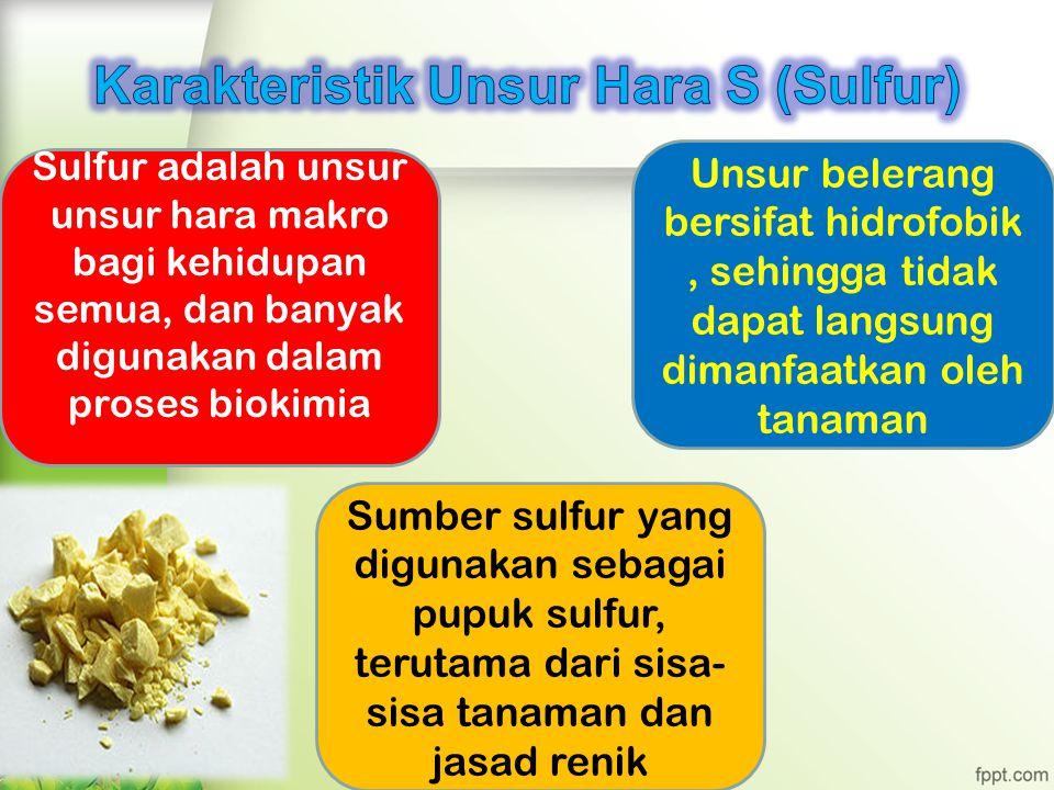 Karakteristik Unsur Hara S (Sulfur)